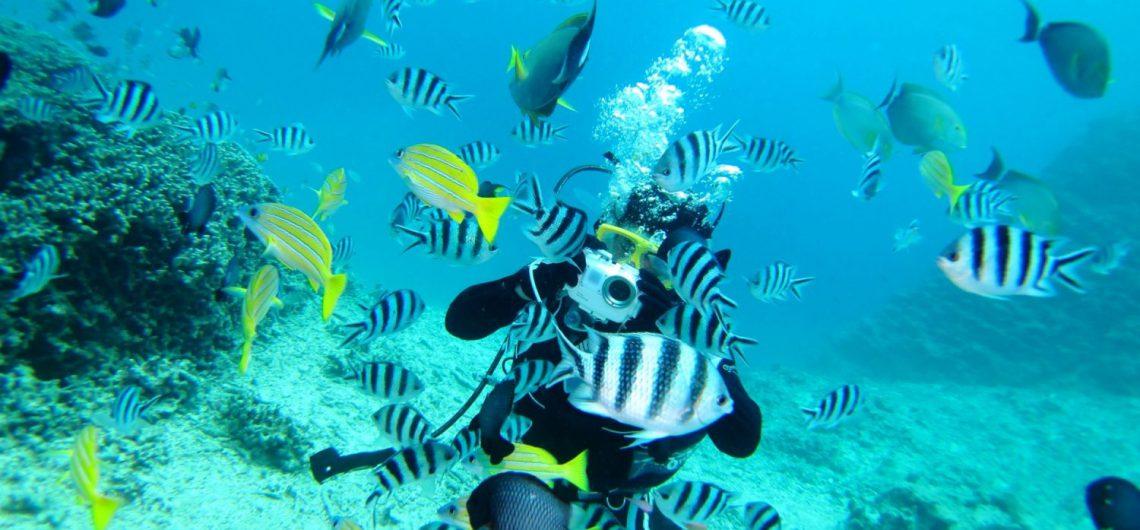 体験ダイビング,セブ島