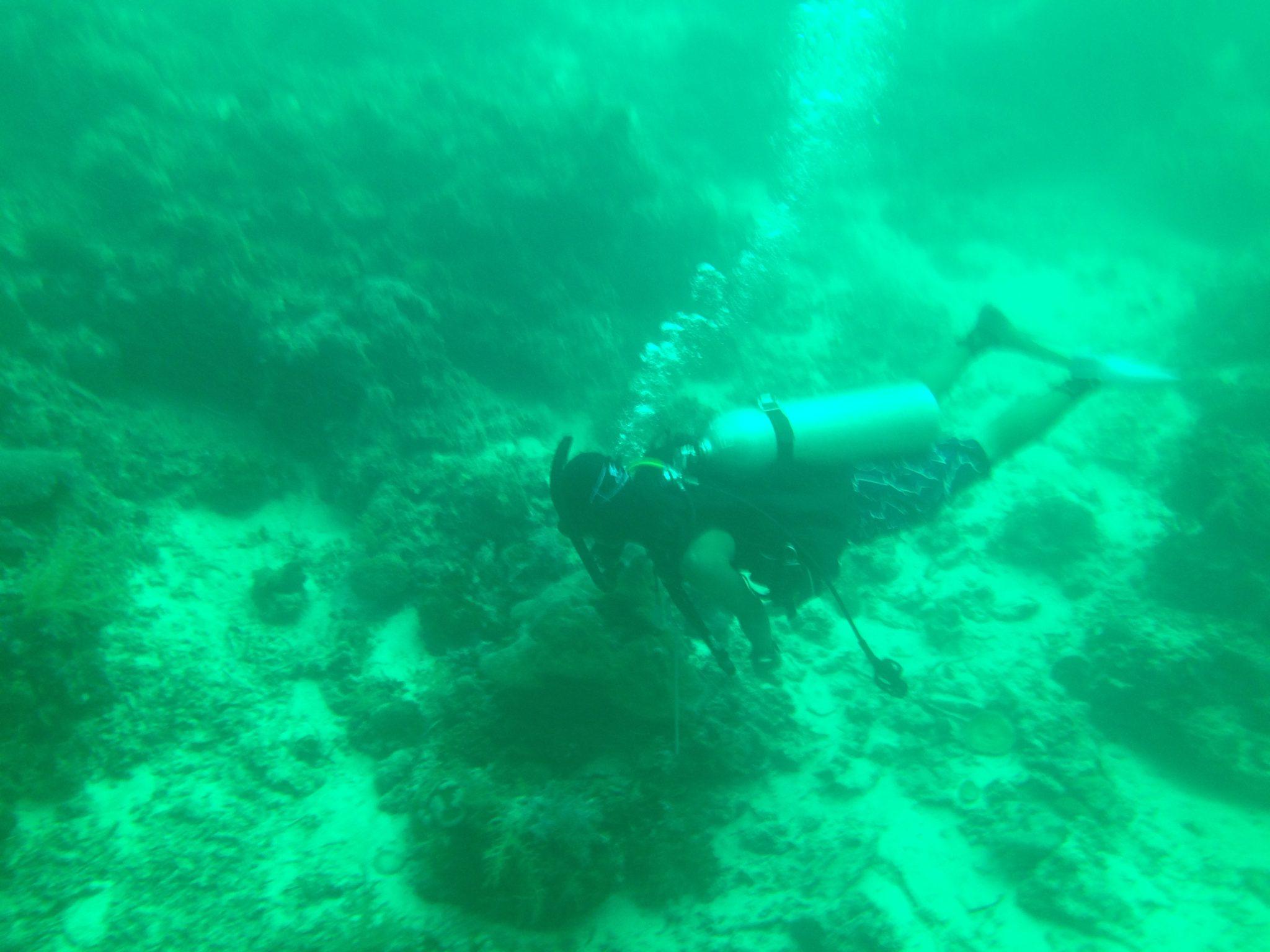 マクタン島沖 ダイビング
